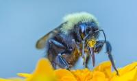 Pollen_JLandon.jpg