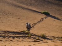 Desert_Breakfast_.jpg