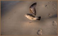 A_walk_on_the_beach_DDingee.jpg