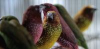 birds-by-Wendy.jpg