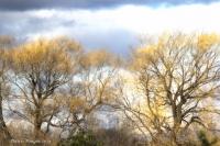 Colors_of_Winter_DDingee.jpg