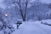 Winter_Morning_by_Steven_Goldberg.jpg