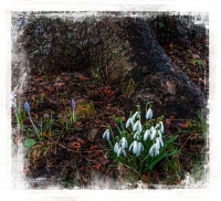 Spring_Flower_by_Bert_Schmitz.jpg