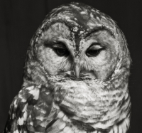 owl_head.jpg