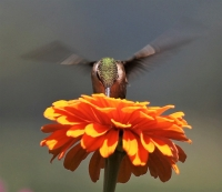 IMG_6475_Hummer_-_Head-on_and_Up_Close.jpg