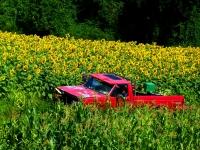Summer_Harvest.jpg