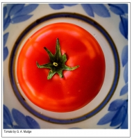 Tomato_by_G__A__Mudge.jpg