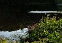 Evening_Pond.jpg