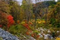 Autumn_2_by_Bert_Schmitz.jpg