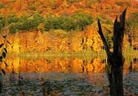IMG_9274__Rudd_Pond_Fall_Colors.jpg