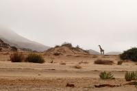 Solitude_Hoanib_Namibia.jpg