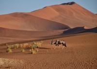 Oryx_red_Dune_Namibia.jpg