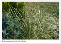 Garden_Grasses_and_Shrubs_by_G__A__Mudge.jpg