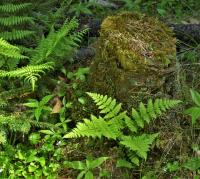 P1090416_-_Forest_Floor_Greens.jpg