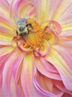 DSCN9882__Bee_on_Dahlia_JRosman.jpg