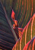 IMG_4019__Leaf_Spiral_JRossman.jpg