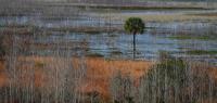 Wetland_NancyZannini.jpg