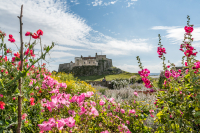 21_2016-08-23_Lorna_Lindisfarne-1649.jpg