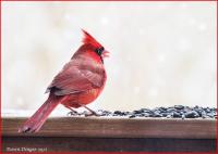Cardinal_dawndingee.jpg