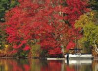 DSCN9930_Autumn_Red_And_White.jpg