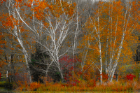 Fallcolors1_LazloGyorsok.jpg