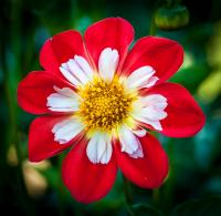 Red___White_1_by_Bert_Schmitz.jpg