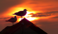 Gulls_at_Sunrise.jpg