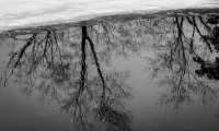 Reflection_in_Black_and_White_1.jpg