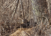 otters_pre_nap.jpg
