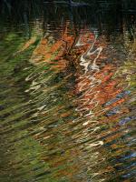Autumn_Ripples.jpg