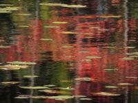DSCN9367_Red_reflections.jpg