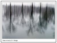 Trees_on_Ice.jpg