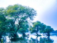 Water_Nature_Reserve_India.jpg