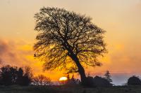 Rodborough_Lone_Tree_sunrise_6017.jpg