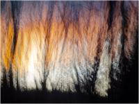 Sunset-Forest_Raphael-Swift.jpg