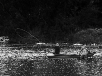 Casting_on_The_River_Tweed-.jpg