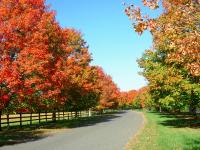 Fall_Colors_-_By_Karen_McMahon.jpg