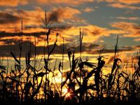 Harvest_Sunset___Jane_R.jpg