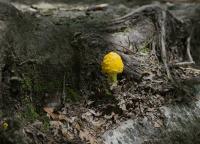 Hoeller-Bear-Mtn-Mushroom.jpg