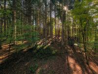 The_Woods-BWilcox.jpg