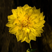 483A8501-CR2_DxO_DeepPRIME-Edit.jpg